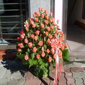 핑크빛사랑1